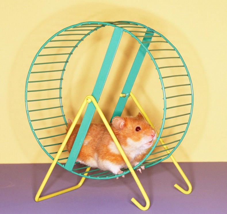 Колесика для хомячка