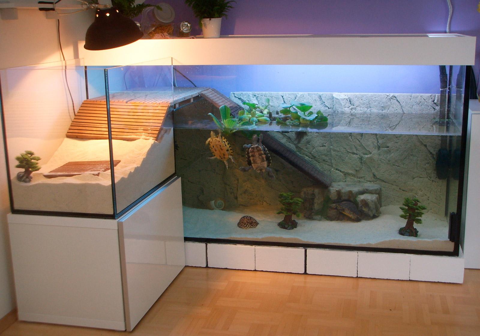 Что нужно для красноухой черепахи, для содержания её дома 2