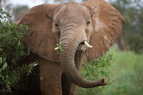 Сколько лет живет слон