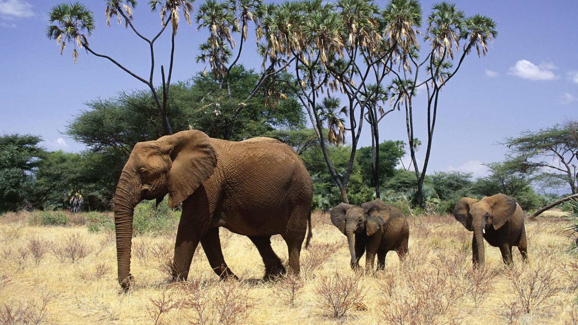Образ жизни слонов