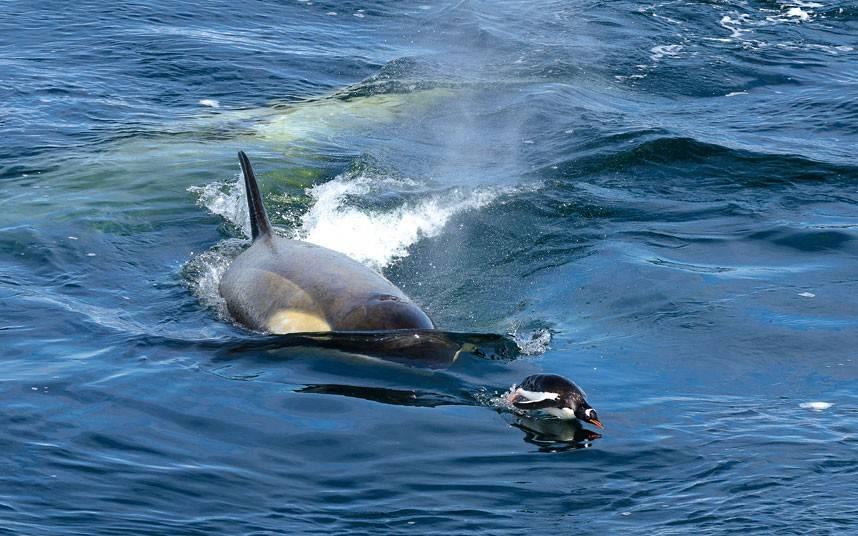 Что едят киты