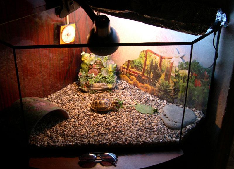Аквариум для сухопутной черепахи