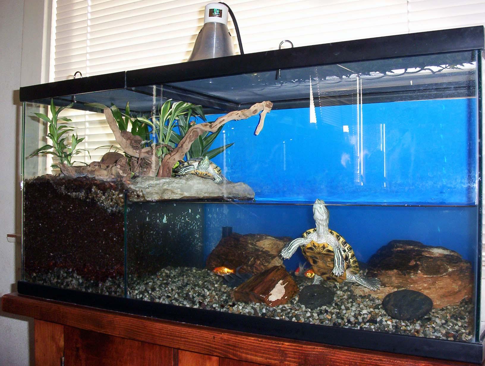 Европейская болотная черепаха ее содержание в дома