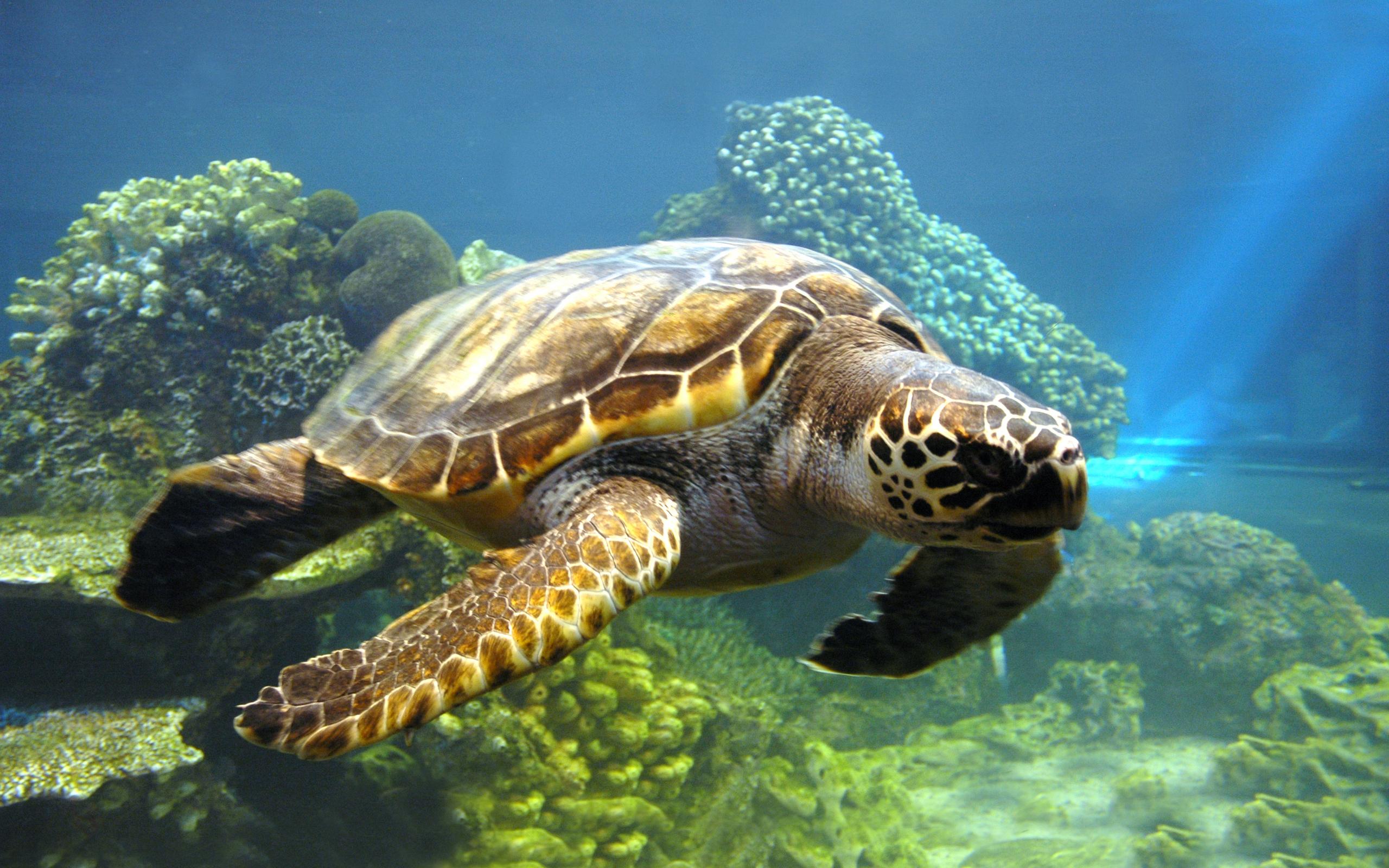 Ареал обитания черепахи