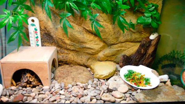 Содержание дома супопутной черепахи