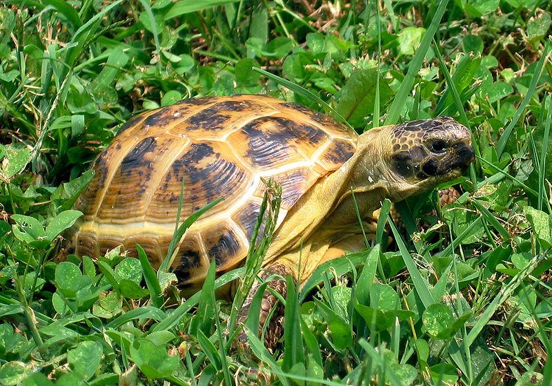 Чем питается черепаха