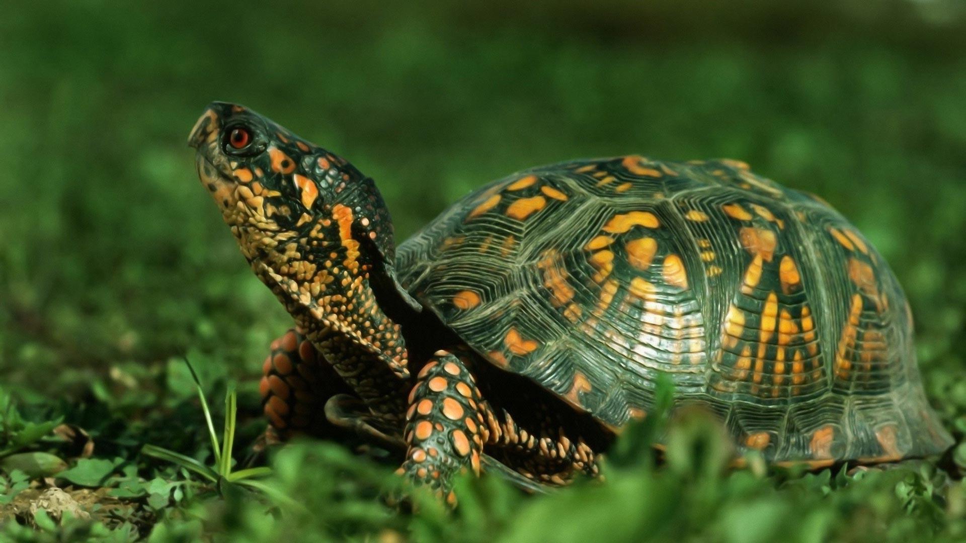 Голова и шея черепахи