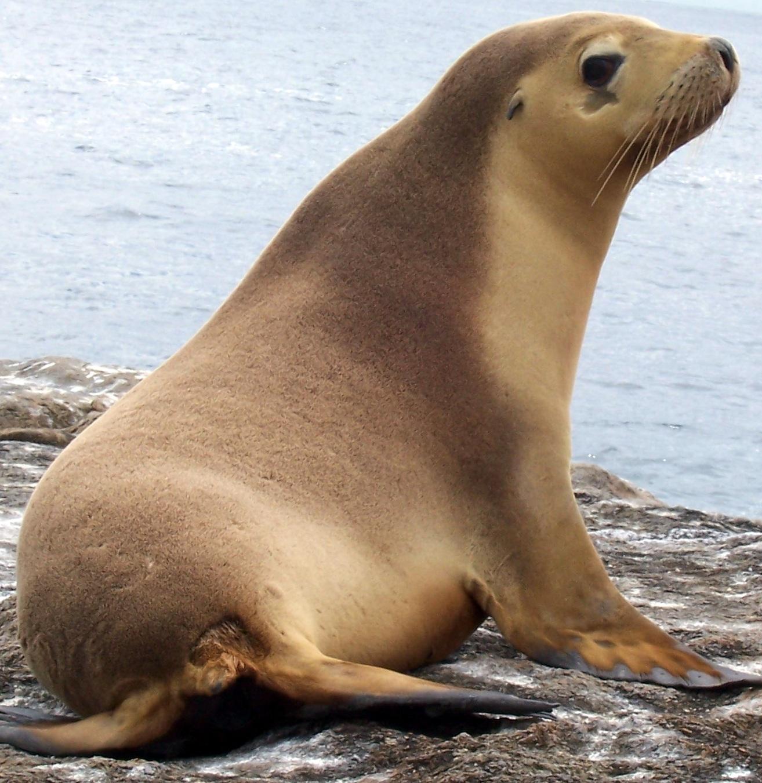 Среда обитания морских львов