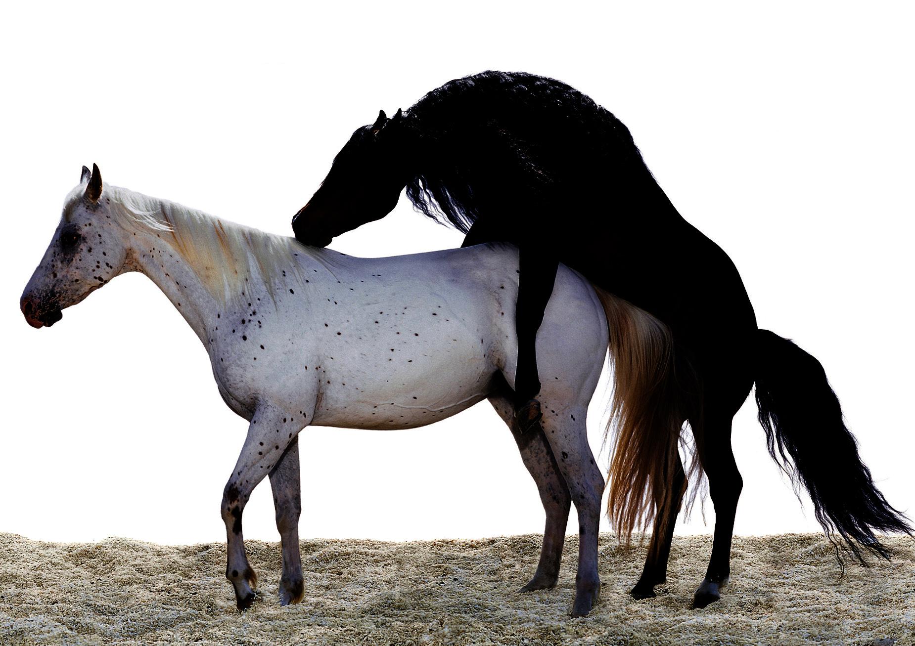 Спаривание лошадей