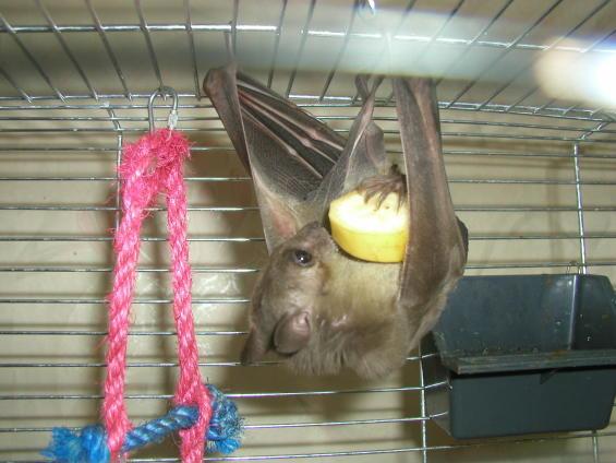 Домик для летучей мыши
