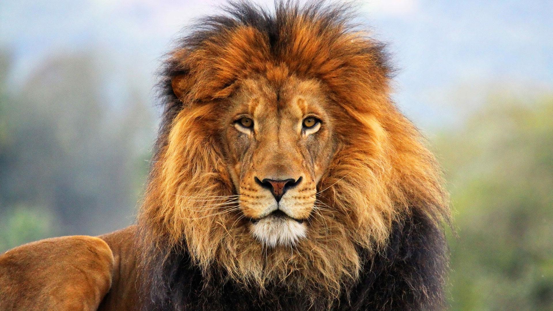загрузить фото львов сказать