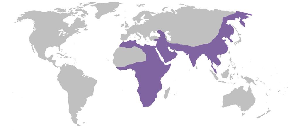 ареал обитания леопардов на карте