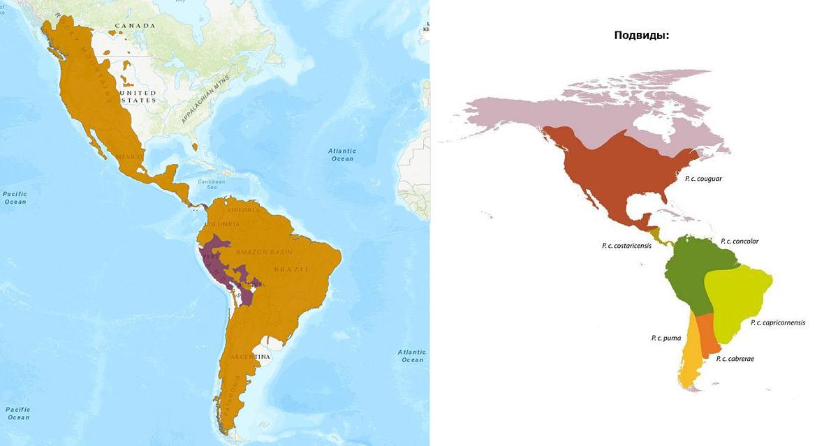 ареал обитания пумы на карте