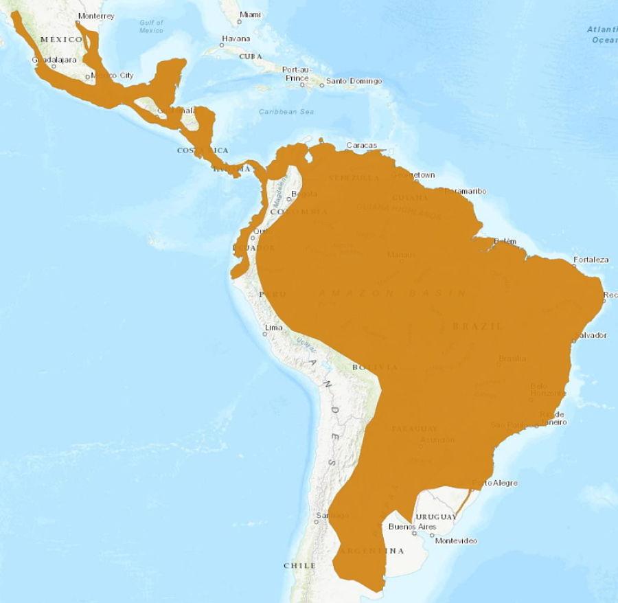ареал обитания ягуарунди на карте
