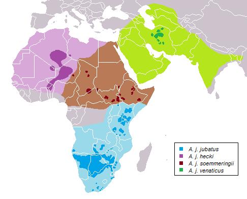 виды гепардов места обитания на карте