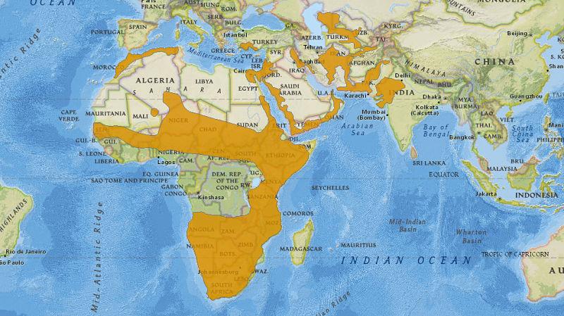 карта обитания каракала