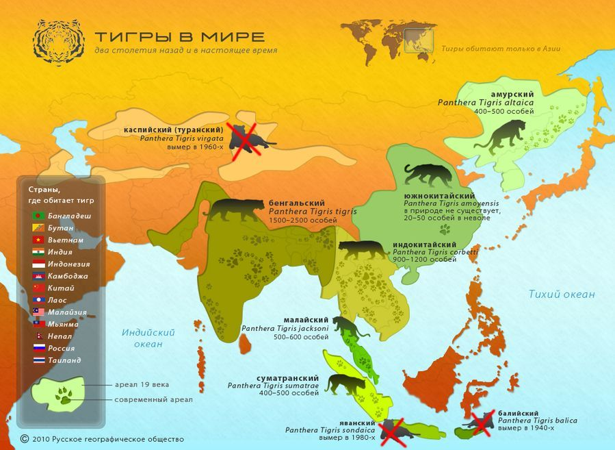 ареал обитания тигров на карте