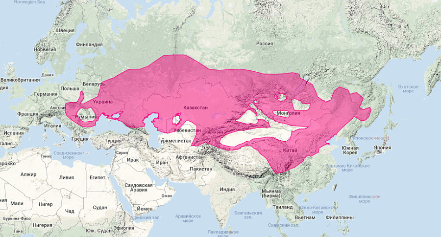 ареал обитания степного хорька