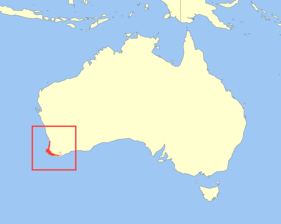ареал обитания квокки на карте